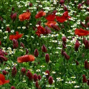 Тревни смески с цветя