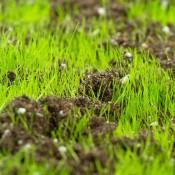 Тревни смески за подсяване