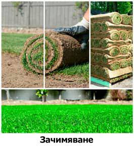 Зачимяване, полагане на тревен чим